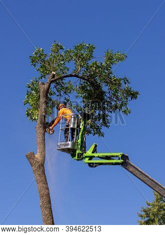 Tree-trimmer Elevated On Platform Cutting Tree