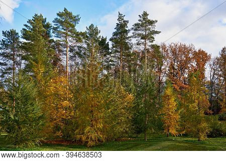 Beautiful Landscape Of Autumn Forest Or Park With Different Trees