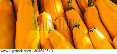 Yellow Squash. Fresh Yellow Zucchini At Outdoor Market Place. Vegetable Marrow Courgette Or Zucchini