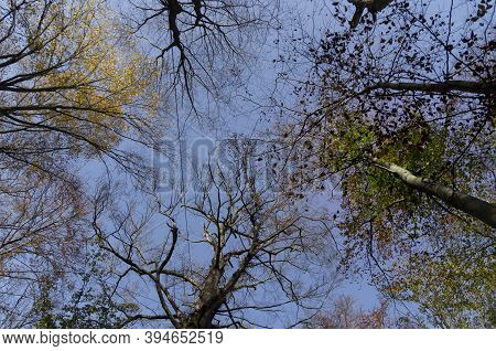Autumn Trees Backgorund - Orange Autumn Trees Tops Against Blue Sunny Sky. Autumn Natural View Of Go