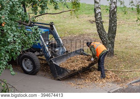 Cleaning Autumn Foliage In City. The Janitor Removes Dry Leaves With A Rake And Loads Into The Tract