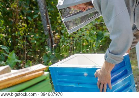 Beekeeper Carries Unit Of Beehive From Styrofoam. Summer Work On Apiary. Hive Stand For Honey Harves