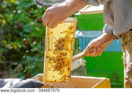 Beehive Spring Management. Beekeeper Inspecting Bee Hive And Prepares Apiary For Summer Season. Beek