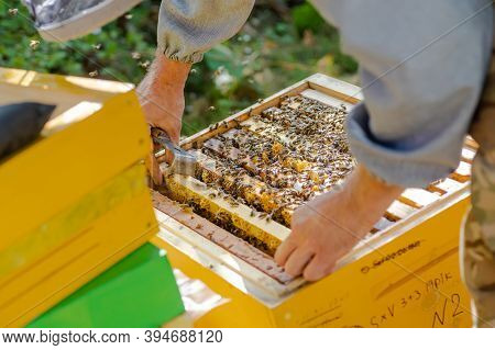 Beekeeper Supervises The Production Of Honey In Bee Bee. Visible Wooden Bee Frames. Frames Are Cover