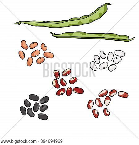 Green Haricot Bean Pods And Seed Variants Of Various Varieties And Colors, Dark And Light Beans, Leg