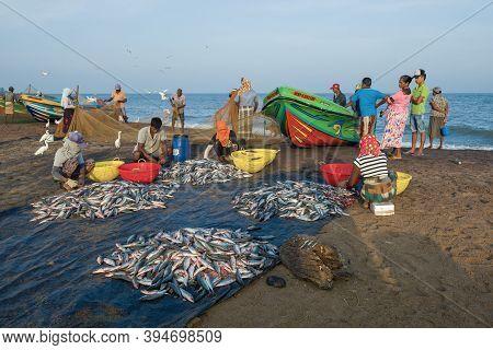 Negombo, Sri Lanka - February 03, 2020: Sri Lankans Sort Out Their Catch On The Ocean Shore
