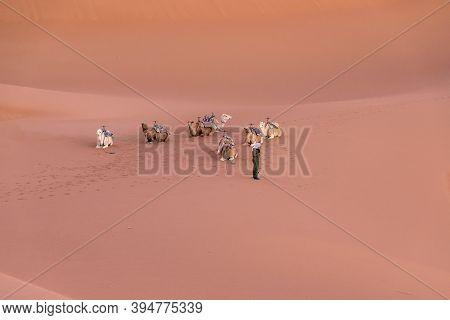 Dromedary Group On The Desert Dune Of Erg Chigaga, At Sahara, At Dawn. Morocco. Concept Of Travel An