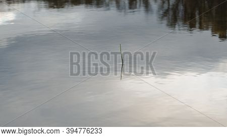 Trees Branches Silhouette Reflecting On Water. Ripples On Water. Single Cane With Shadow In The Pond