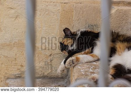 Street Cat Lay On A Ground With Unfocused Fence Foreground Frame Object