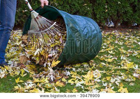 Raking autumn foliage in the garden