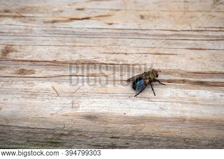 With A Defocused Effect, The Eye Is Drawn To The Pesky Fly That Rests On The Wooden Planks Of A Back