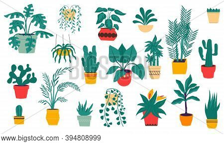 House Plants. Cartoon Tropical And Desert Flowers In Ceramic Pots. Isolated Evergreen Indoor Ficuses