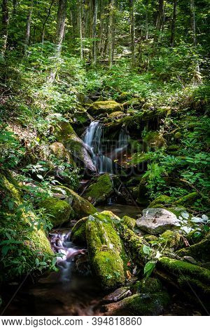 Stream Flows Down A Thick Mountain Forest In The Great Smoky Mountains