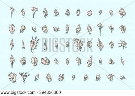 Seashell, Shell, Sea, Mollusk, Shellfish, Nautical Illustration