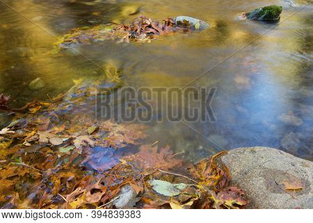 Glowing Golden River Runs Between Rocks And Maple Leaves, Goldstream Provincial Park, Vancouver Isla