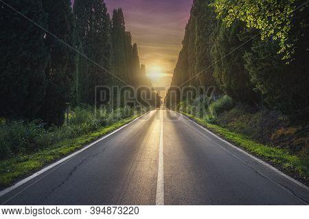 Bolgheri Famous Cypresses Trees Straight Boulevard Landscape At Sunset. Maremma Landmark, Tuscany, I