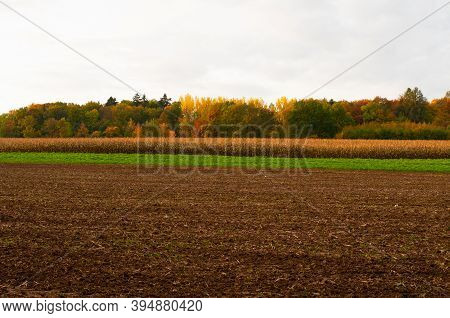 A Landscape With Trees In Autumn Leaf Colors And Agricultural Fields