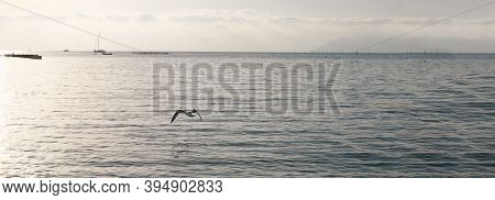 Seagulls Flying Over The Sea. Banner Size. Grey Evening Landscape On Sunset. Lonely Seagull Flies Lo