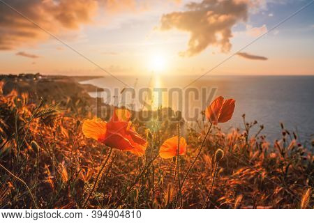 Poppies Over Spring Sea Landscape With Sunset Sky And Volcanic Rocky Coastline. Calm Sea On A Backgr