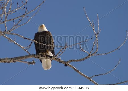 Eagle's Perch
