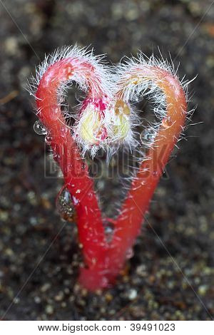 Heart Sprouts