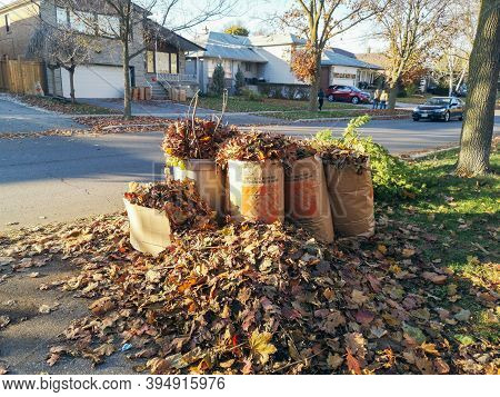 Toronto, Ontario, Canada - November 4, 2020: Old Dried Withered Autumn Fall Leaves Collected In Pape