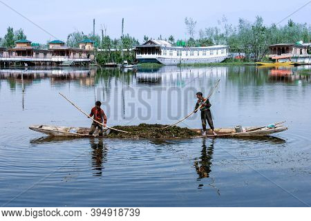 Srinagar, India - January 7, 2021 : Kashmiri Boatmans Removes Algae Growing In Dal Lake At In Srinag