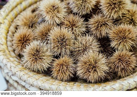Bur Of Japanese Chestnuts In The Wooden Basket. Selective Focus.
