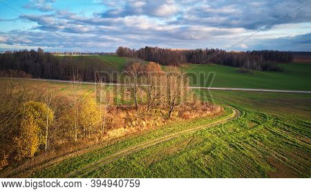 Beautiful Green Field. Winter Cereal And Blue, Cloudy Autumn Sky.