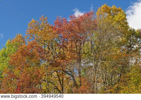 Fall Colors In The North Woods  In Governor Thompson State Park In Wisconsin