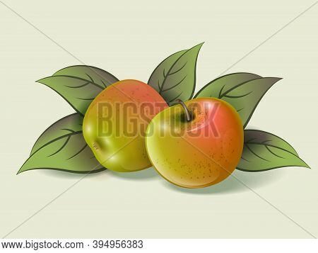 Two Ripe Apples On A Light Background. Ripe Fruits And Leaves Illustration. Organic Farm Products. I
