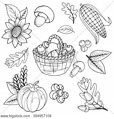 Vector Stock Illustration, Set Of Black And White Elements, Coloring Book, Autumn Leaves, Acorns, Pu