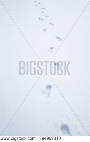 The Footprint In Snow As Nature Background