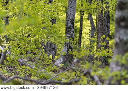 Green Forest Nature. Ancient Green Forest. Nature. Oak Forest. Natural Environment. Forest Nature. R