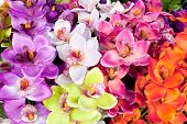 file of colorful of artificial  orchid flower poster