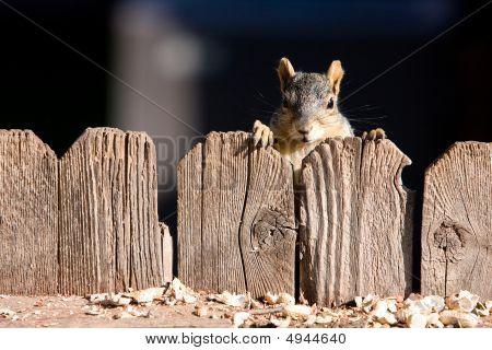 Cute Squirrel Face