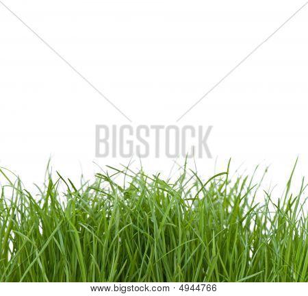 Unkempt Grass
