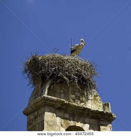 Stork nests in the old bell of Torrelaguna