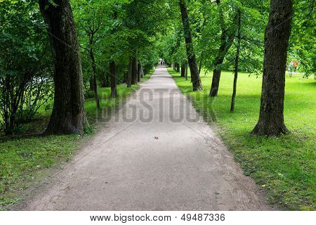 Streight Road Path With Trees And Gras