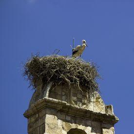 Stork nests in the old bell of Torrelaguna