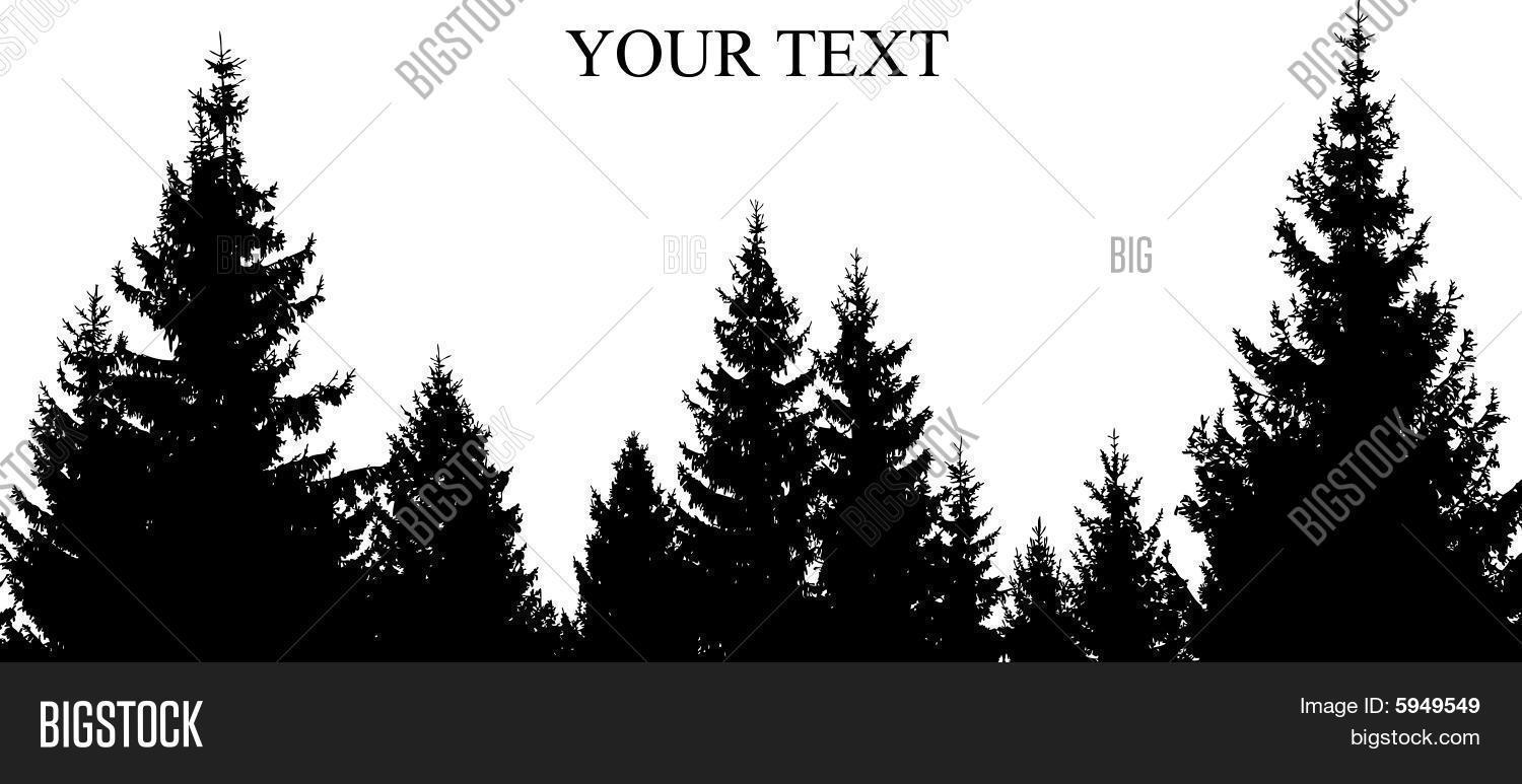 Pinetree Silhouette Vector Photo Free Trial Bigstock