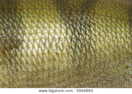 poster of close up view of a fish scale