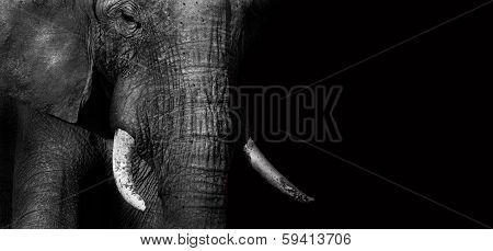 Elephant (creative Edit)