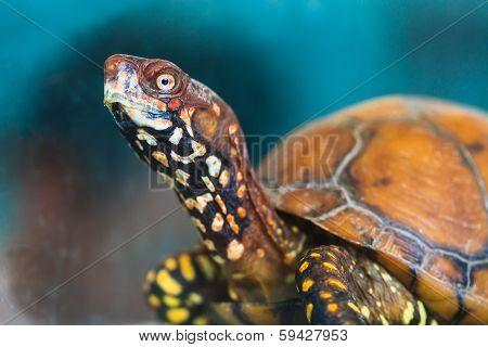 Tortoise_ap