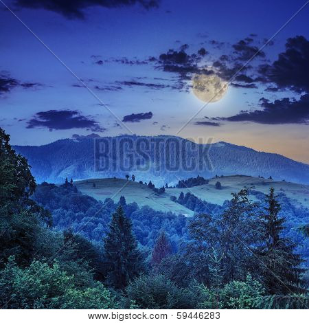 Coniferous Forest On A Steep Mountain Slope At Night