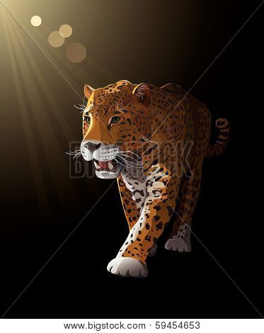 Jaguar, wild cat Panther by dark night, moonlight. Vector illustration