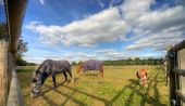 Three horses grazing in a fenced paddock in England with cloudy blue sky in the background poster