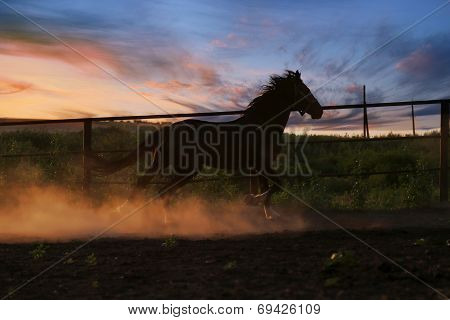 Horse In The Dust
