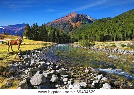 National park Krimml falls in Austria. Upper courses of falls - rather narrow fast seething small river among green mountain meadows. On the shore of the mountain river stands the village horse