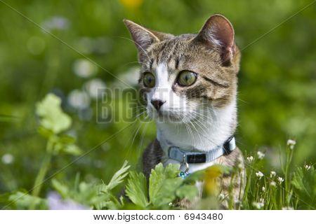 Keen Cat